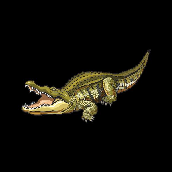 если карточки крокодил картинки каждом номере имеется