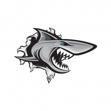 Shark Tearing 01473