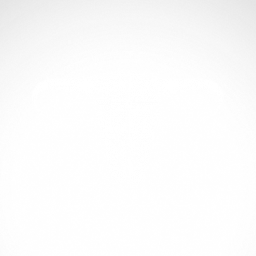 Cow Skull 02505