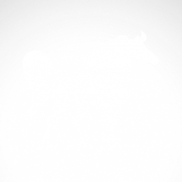 Horse 04312