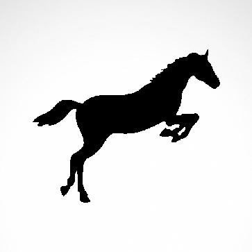 Horse 04332