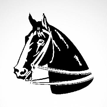 Horse 04339