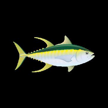 Yellowfin Tuna 05924