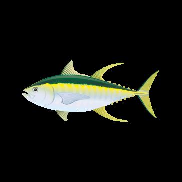 Yellowfin Tuna 05925