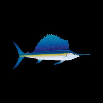 Sailfish Marlin 05926