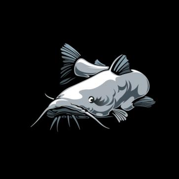 Catfish 05934