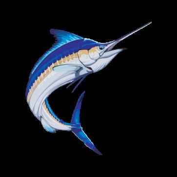 Sailfish Marlin 05961