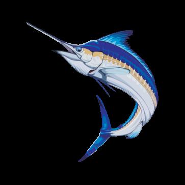 Sailfish Marlin 05962