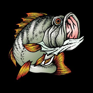 Bass Jump  05963
