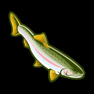 Trout 06010