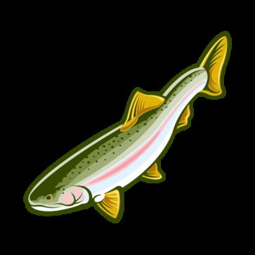 Trout 06011