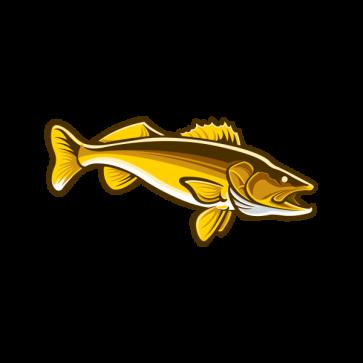 Salmon 06012