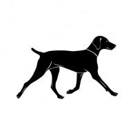 Domestic Dog 00890