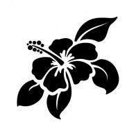 Hibiscus 00901