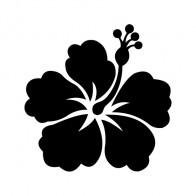 Hibiscus 00913