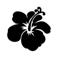 Hibiscus 00921