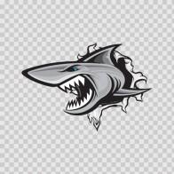 Shark Tearing 01474
