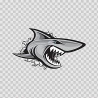 Shark Tearing 01475