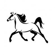 Horse Running 01766