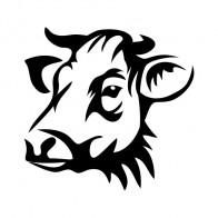 Cow Head 01896