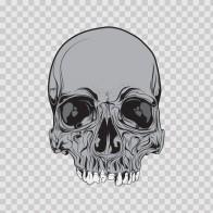 Skull 02458