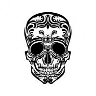 Ancient Skull 02514
