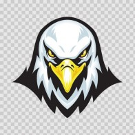 Bald Eagle Head 03098