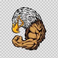 Bald Eagle Bodybuilder 03294