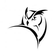 Owl 03377