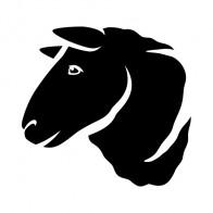 Sheep Head 03417