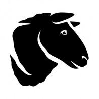 Sheep Head 03418