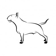 Domestic Dog 03469