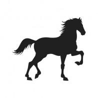 Horse 04304