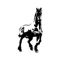 Horse 04336