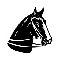 Horse 04338