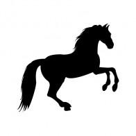 Horse 04340
