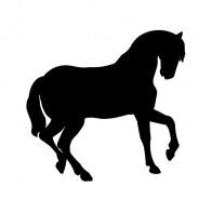 Horse 04346