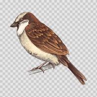 Wild Bird 04682