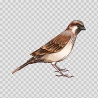 Wild Bird 04683