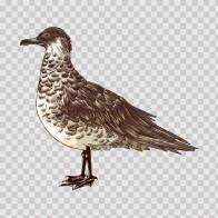 Wild Bird Seagull 04684