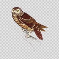 Wild Bird Owl 04685