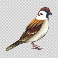 Wild Bird 04719