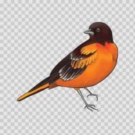 Wild Bird 04722