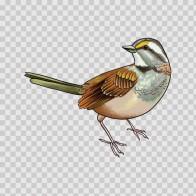 Wild Bird 04724