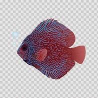 Aquarium Fish Disk 05102