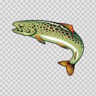 River Trout 05651