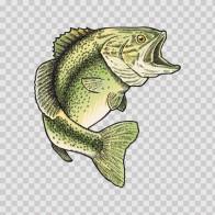 Bass Fish 05907