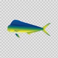 Dorado Dolphin Fishing 05921