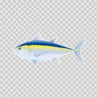 Blue Fin Tuna (Thunnus Thynnus) 06035