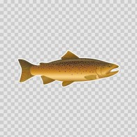 Brown Trout 06040